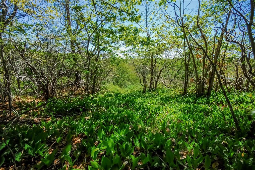 Additional photo for property listing at 50 BRENTON RD, Newport, Rhode Island  Newport, Rhode Island,02840 Estados Unidos
